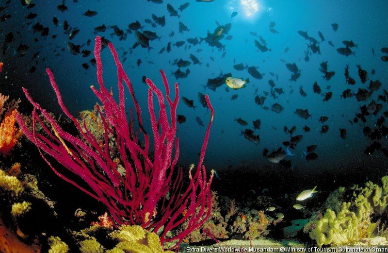 extra-divers-worldwide-musandam-oman-musandam-recepcja.jpg
