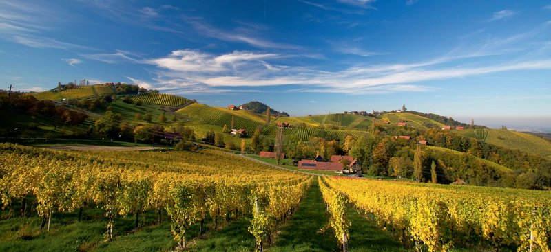 Berghof Vital - Steirisch-Slowenisches Weinland