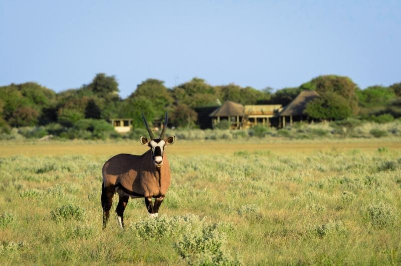 kalahari-plains-camp-namibia-namibia-kalahari-rozrywka.jpg