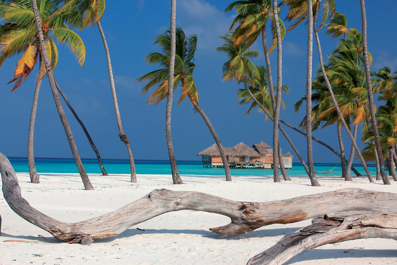 gili-lankanfushi-maldives-malediwy-atol-nord-male-nord-male-atoll-restauracja.jpg