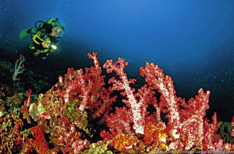 extra-divers-worldwide-qantab-extra-divers-worldwide-qantab-oman-pokoj.jpg