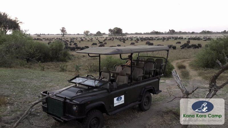 kana-kara-camp-botswana-park-narodowy-okavango-delta-budynki.jpg