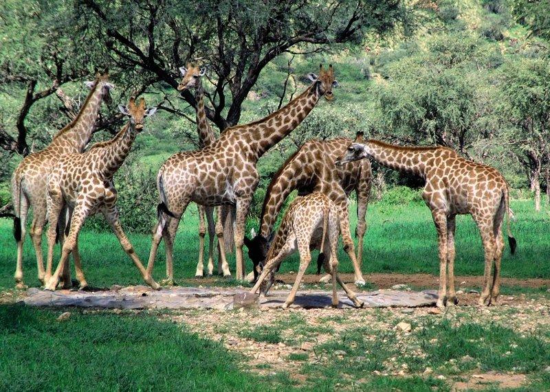 ameib-ranch-ameib-ranch-namibia-wyglad-zewnetrzny.jpg