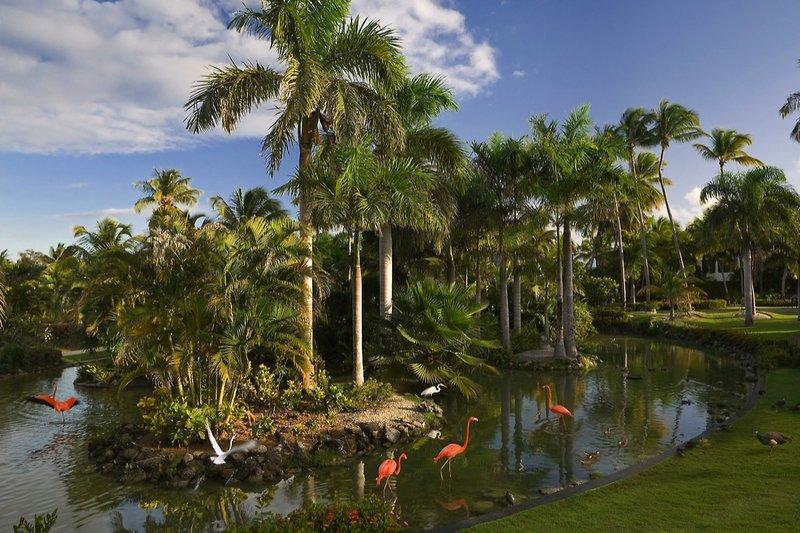 melia-caribe-tropical-melia-caribe-tropical-wschodnie-wybrzeze-wschodnie-wybrzeze-morze-ogrod.jpg